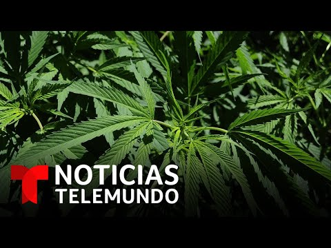 El Senado de México aprueba una propuesta para legalizar el uso recreativo de la marihuana