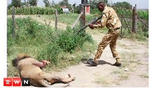 Outcry in Kenya as escaped lion shot dead