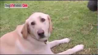 Dog Whisperer Thug Life