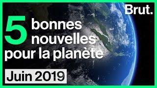 5 bonnes nouvelles pour la planète