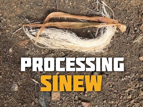 How to Process Backstrap Sinew