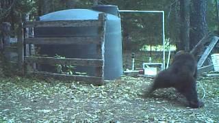 Snimala je ogromnog crnog medvjeda kako ruši drvenu ogradu iza njene kuće. Nije ni sanjala šta će uslijediti na 0:23… (VIDEO)