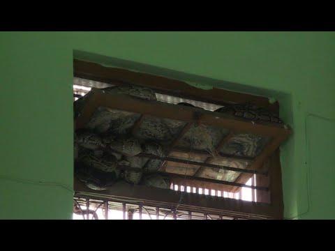 معبد بوذي في بورما يتحوّل موطنا للأفاعي