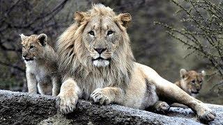 7 Animais Que Foram Levados Pelo Homem à Extinção E Você Não Sabia