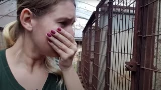 Help save dogs in the dog meat trade!