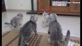 Two Kittens Catch My Cat Toy So Much Fun | Funny Cat And Kittens 2018 | Meo Cover Home