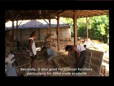 Teak Farm for the Future – Part 2