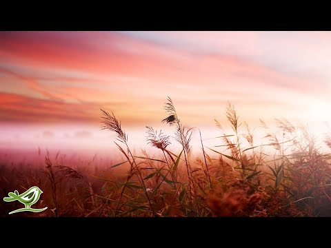 Relaxing Piano Music: Sleep Music, Relaxing Music, Soft Sleeping Music, Fall Asleep ★129