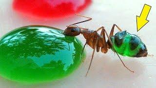 Я покрасил Муравьев! Разноцветные муравьи! alex boyko