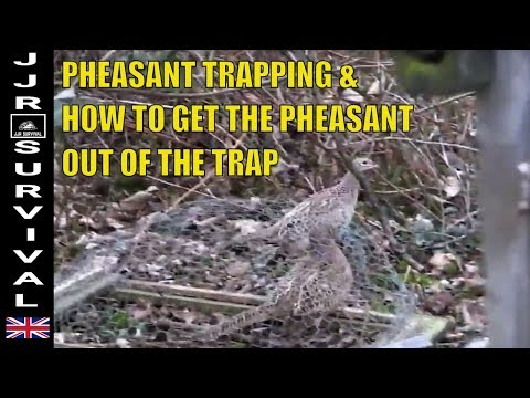 Pheasant Trapping (How To Get It Out)