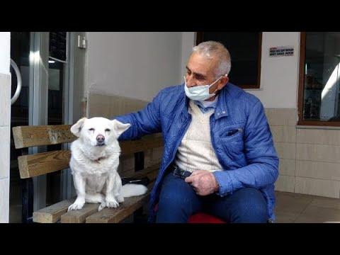 Sahibini 5 gündür hastane kapısında bekleyerek dünya basınına konu olan köpek, sahibiyle buluştu