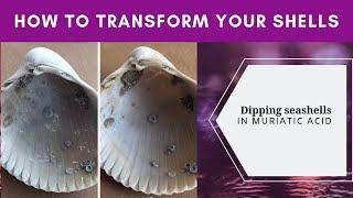 Using muriatic acid to clean seashells