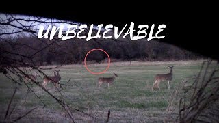 Took My Daughter Hunting And CAUGHT THIS ON CAMERA, Giant Creature?
