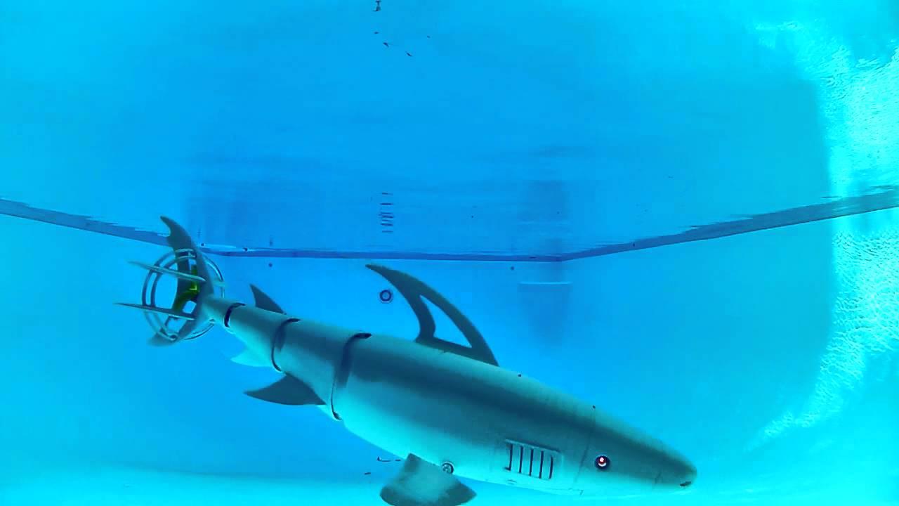 Robo Shark Youtube