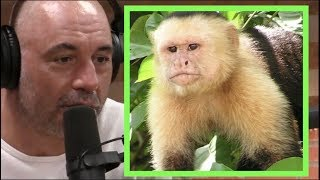 Joe Rogan | Monkeys in Costa Rica w/Andrew Santino