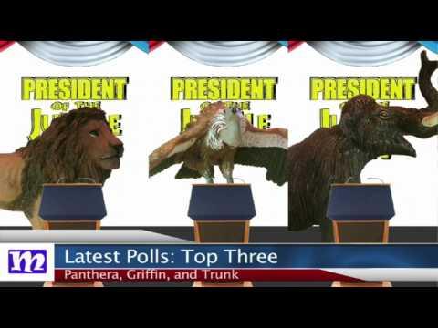 Pre-debate Update   President of the Jungle 2017   MMNN Newsbreak   Many Miniatures Theater