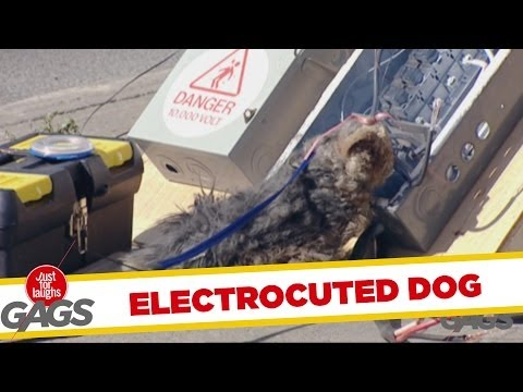 Electrocuted Dog – Throwback Thursday
