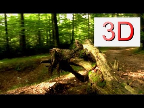 3D Video: WALKING River & Forest #4