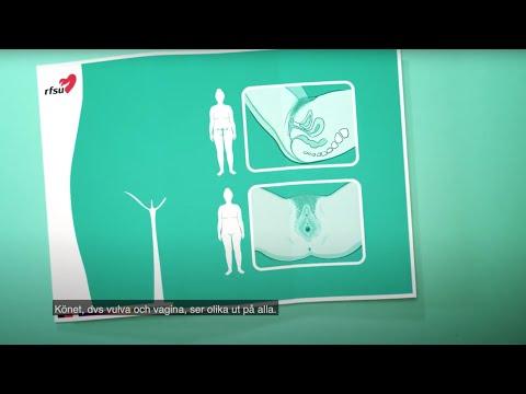 RFSU informerar om kvinnans kön på dari   ارگان زن