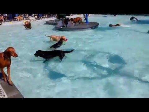 Na kraju svake sezone, ovaj bazen je dan samo za pse