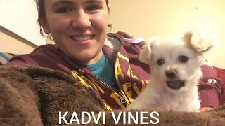 Funniest Confused Pets Compilation 2019_Funny Pets | Funny Reactions From Peta| Kadvi Vines
