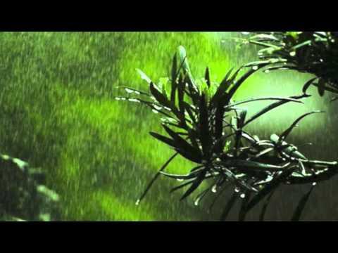翻唱 伍佰《飛在風中的小雨》