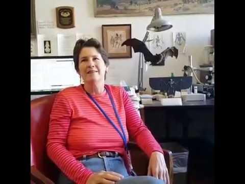 Vampire Bats With Mammalogist Nancy Simmons