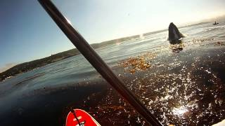 Paddling with Whales in California