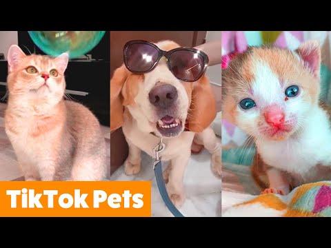 Cutest Pets on TikTok | Funny Pet Videos