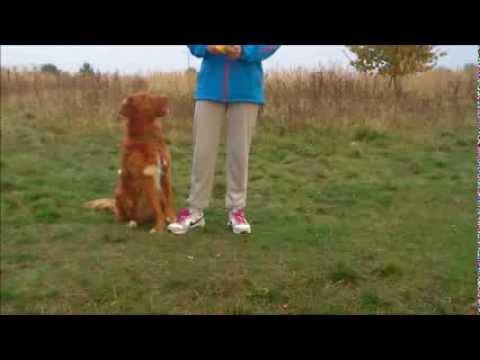 Jak nauczyć psa sztuczki - balansowanie na nogach właściciela