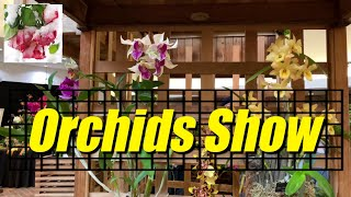 Soos Orchids Show 2019 (1) Slideshow - YouTube