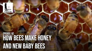 """How Bees Make Honey and new Baby Bees  - Episode 92: """"The Joy of Bees"""""""