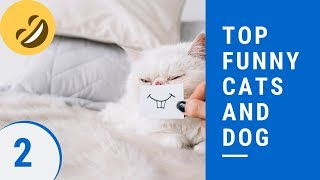 Top funny cats and dog Part 2 - 😻best funny cat and dog videos ever 2019😻