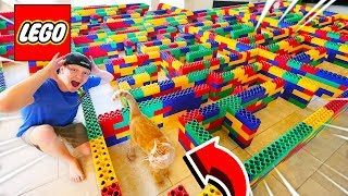 WORLD'S BIGGEST Maze for Cats! Can the Kitten ESCAPE?
