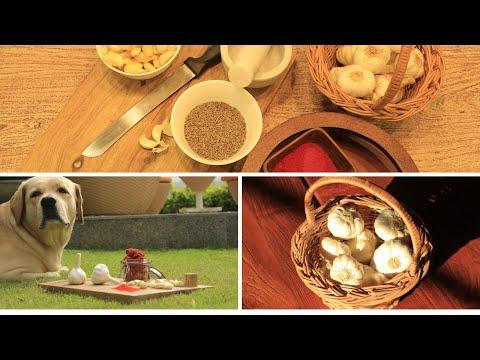 Garlic Chutney Recipe for Dosha   Easy and Quick Garlic Chutney Recipe for Dip   Lehsun Ki Chutney
