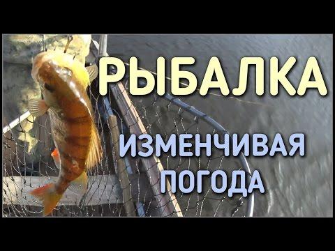 рыбалка прикормка для плотвы