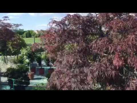 Video 96ARH-vt7d4