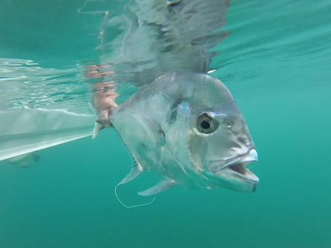 Fish That Snag - Woody Island PB Diamond Trevally