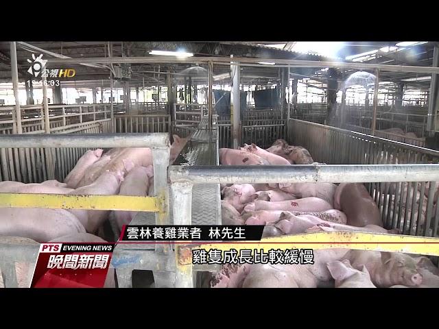 高溫炎熱影響產量 豬肉.土雞.文蛤價格攀升