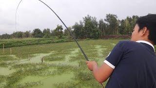 Câu Cá Giải Trí Như Này Mới Thích    Fishing
