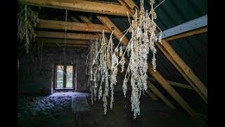Abandoned House FOUND WEED IN THE ATTIC