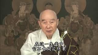 Chúng ta có Phật A Di Đà dẫn dắt, Phât A Di Đà ở đâu Chính là Kinh Vô Lượng Thọ ..