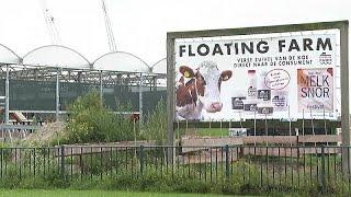 مزرعة-أبقار-عائمة-فوق-الماء-في-روتردام-لحماية-المناخ