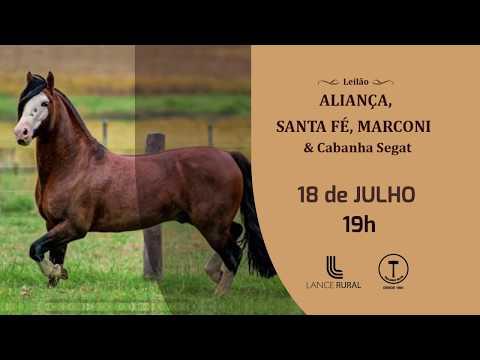 Leilão Aliança, Santa Fé, Marconi & Convidados