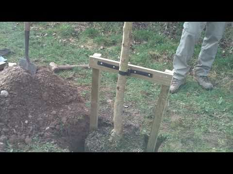 Large Tree Staking Kit for trees over 2.5m