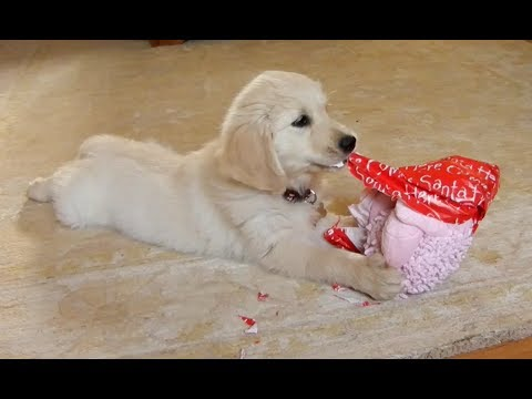 Funny Dogs Opening Christmas Presents Compilation