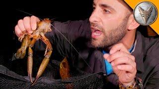 MONSTER River Shrimp!