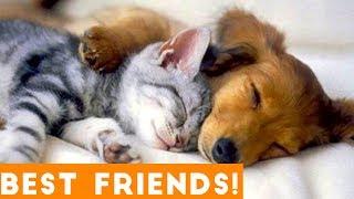 Cutest Pet Friend Compilation September 2018| Funny Pet Videos