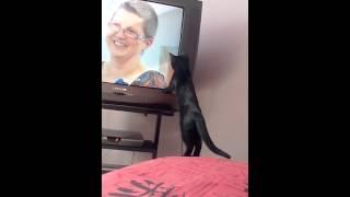 テレビに夢中な猫