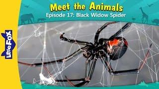 Meet the Animals 17 | Black Widow Spider | Wild Animals | Little Fox | Animated Stories for Kids